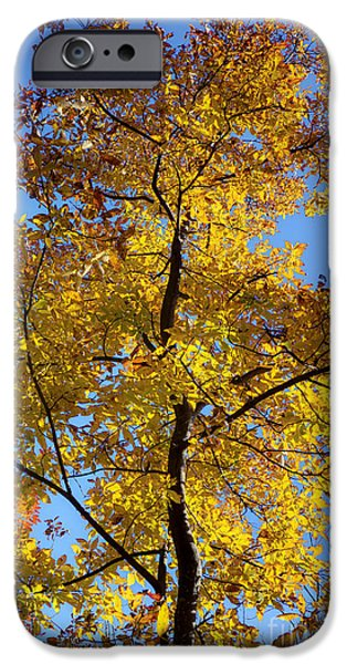 Fall iPhone Cases - Fall Colors Beautiful Tree iPhone Case by Dustin K Ryan