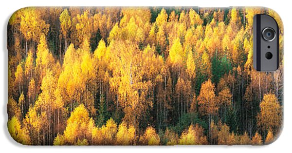 Tall Trees iPhone Cases - Fall Colors Sundsval Vicinity Sweden iPhone Case by Panoramic Images