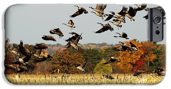 Geese iPhone Cases - Fall Feast iPhone Case by Thomas Young