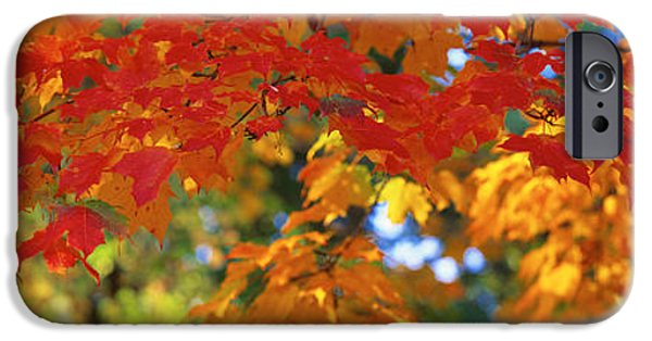 Leaf Change iPhone Cases - Fall Foliage, Guilford, Baltimore City iPhone Case by Panoramic Images
