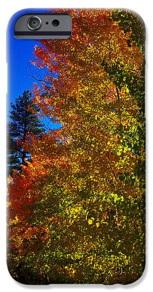 Fall Foliage Palette iPhone Case by Scott McGuire