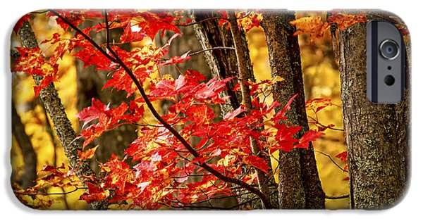 Fiery iPhone Cases - Fall forest detail iPhone Case by Elena Elisseeva