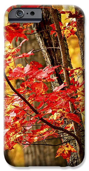 Fall forest detail iPhone Case by Elena Elisseeva