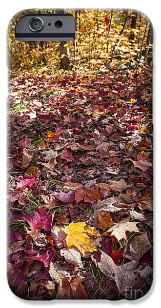 Forest Floor iPhone Cases - Fall forest floor  iPhone Case by Elena Elisseeva