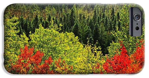 Algonquin iPhone Cases - Fall forest rain storm iPhone Case by Elena Elisseeva