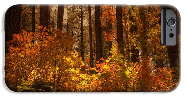 Oak Creek iPhone Cases - Fall Forest  iPhone Case by Saija  Lehtonen