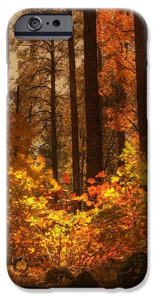Fall Forest  iPhone Case by Saija  Lehtonen