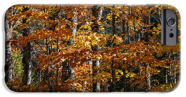 Fall iPhone Cases - Fall forest with orange leaves iPhone Case by Elena Elisseeva