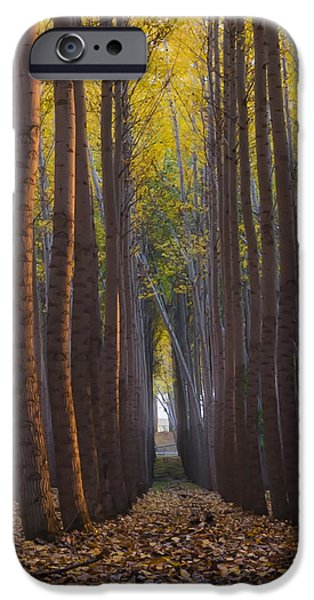 Fall iPhone Cases - Fall In Oregon iPhone Case by Exquisite Oregon