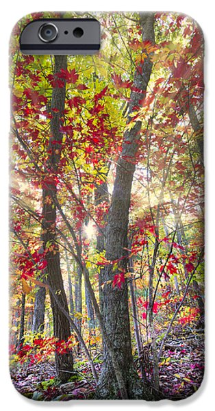Oak Creek iPhone Cases - Fall Laser Beams iPhone Case by Debra and Dave Vanderlaan