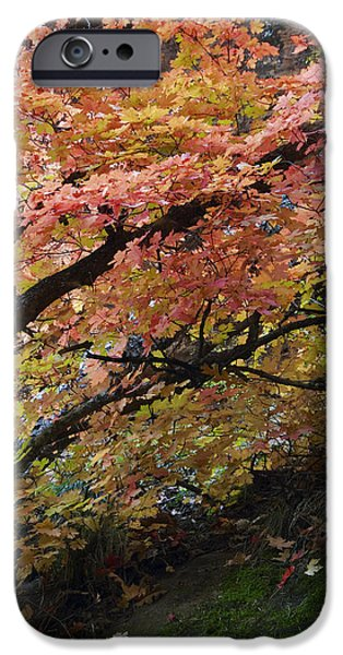 Fall Leaves at West Fork Arizona iPhone Case by Dave Dilli