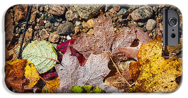 Fall iPhone Cases - Fall leaves in water iPhone Case by Elena Elisseeva