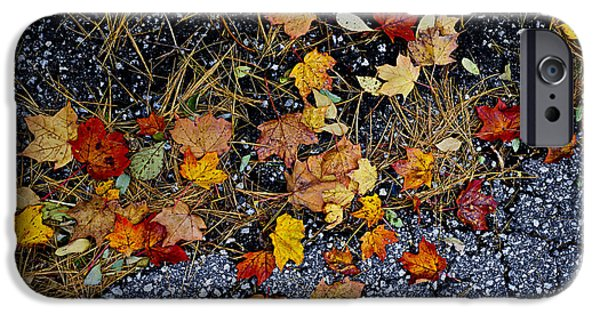 Fallen Leaf iPhone Cases - Fall leaves on pavement iPhone Case by Elena Elisseeva