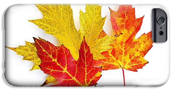 Vivid iPhone Cases - Fall maple leaves on white iPhone Case by Elena Elisseeva