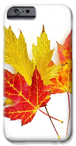 Fall maple leaves on white iPhone Case by Elena Elisseeva