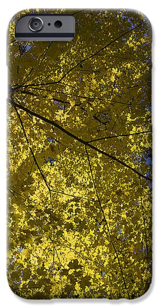 Fall maple iPhone Case by Steven Ralser