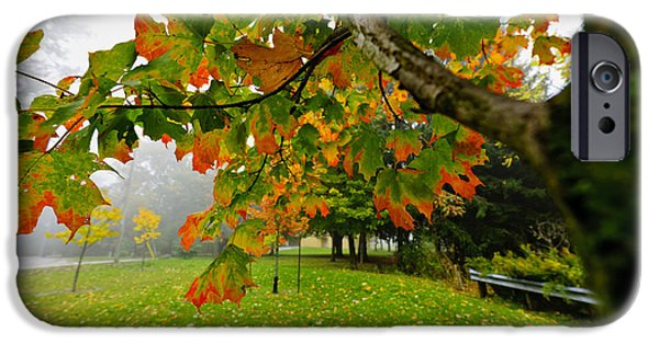 Turning Leaves iPhone Cases - Fall maple tree in foggy park iPhone Case by Elena Elisseeva