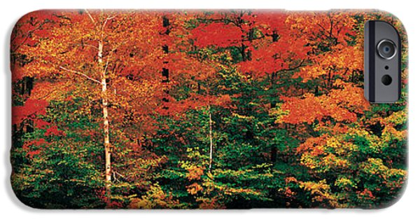 Fall iPhone Cases - Fall Maple Trees iPhone Case by Panoramic Images