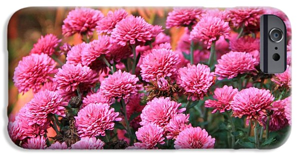 Colors Of Autumn iPhone Cases - Fall Mums iPhone Case by Dan Sproul