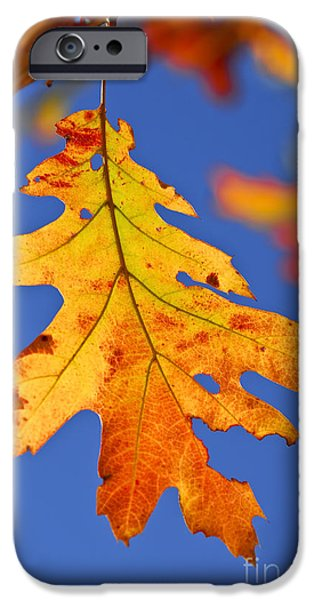 Autumn Woods iPhone Cases - Fall oak leaf iPhone Case by Elena Elisseeva