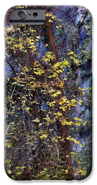 West Fork iPhone Cases - Fall on the West Fork Trail iPhone Case by Ruth Jolly