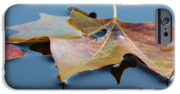 Autumn Leaf On Water iPhone Cases - Fall Reflections iPhone Case by Jane Ford