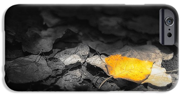 Leaf Change iPhone Cases - Fall iPhone Case by Scott Norris