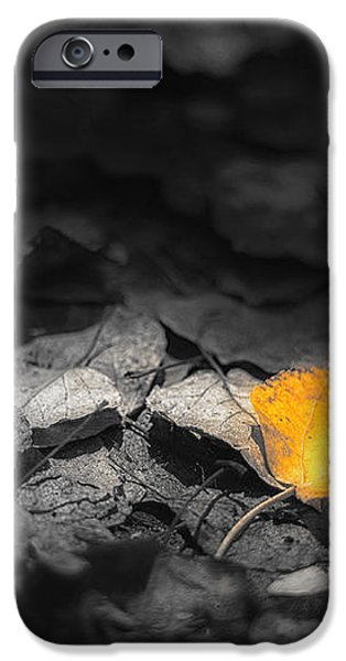 Fall iPhone Case by Scott Norris