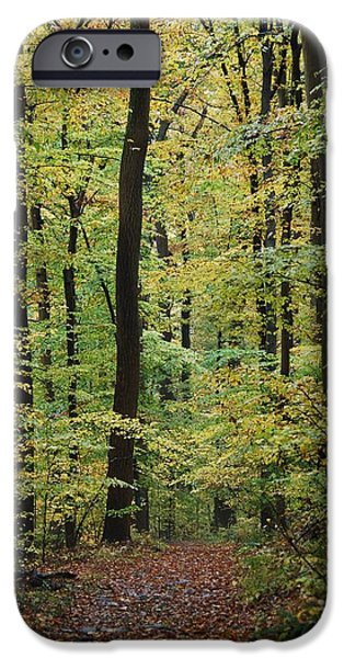 Haverford College iPhone Cases - Fall Trail iPhone Case by Judy Gallagher