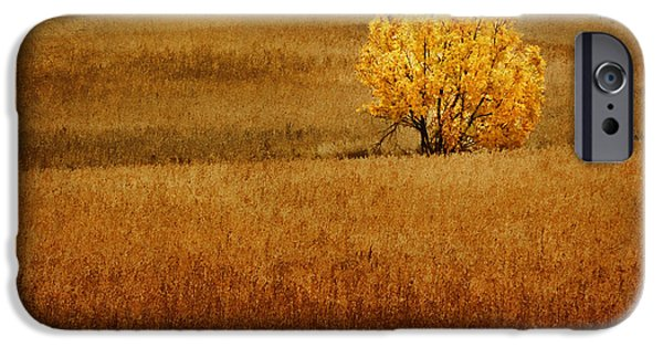 Nebraska iPhone Cases - Fall Tree and Field #1 iPhone Case by Nikolyn McDonald