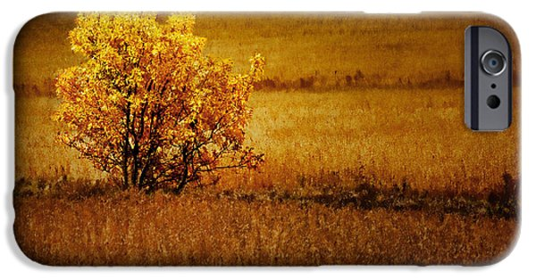 One iPhone Cases - Fall Tree and Field #2 iPhone Case by Nikolyn McDonald