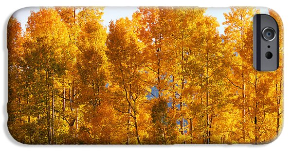 Fall iPhone Cases - Fall Trees 8x10 Crop iPhone Case by Kate Avery