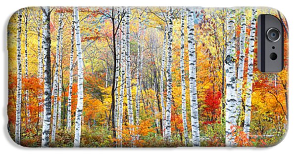 Birch Tree iPhone Cases - Fall Trees, Shinhodaka, Gifu, Japan iPhone Case by Panoramic Images