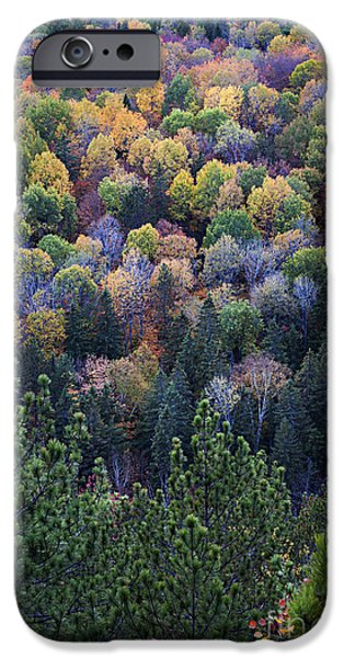 Forest iPhone Cases - Fall treetops at Lookout iPhone Case by Elena Elisseeva