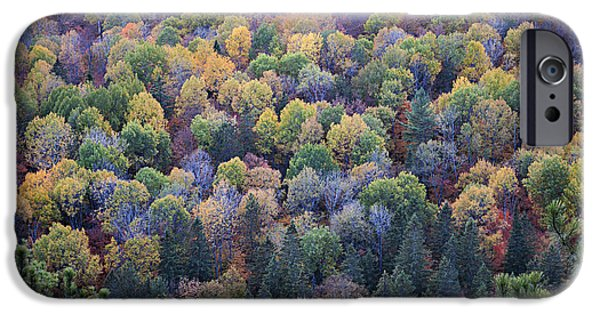 Forest iPhone Cases - Fall treetops iPhone Case by Elena Elisseeva