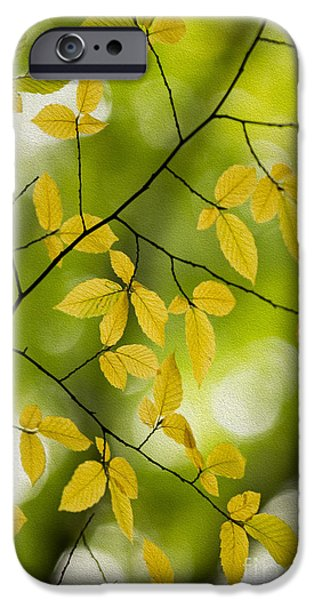 Fall iPhone Cases - Fall Yellow Leaves 3 iPhone Case by Rebecca Cozart
