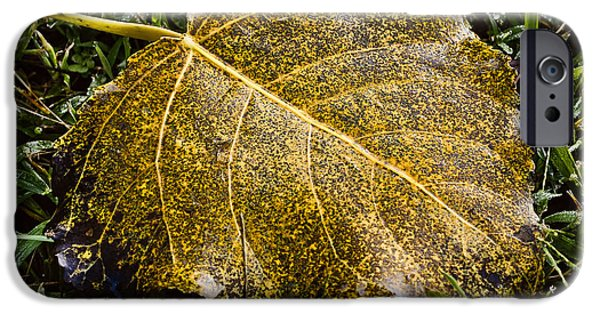 Fallen Leaf On Water iPhone Cases - Fallen Leaf 1 iPhone Case by Greg Jackson