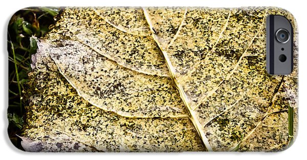 Fallen Leaf On Water iPhone Cases - Fallen Leaf 3 iPhone Case by Greg Jackson