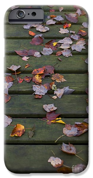 Fallen Leaf iPhone Cases - Fallen leaves iPhone Case by Diane Diederich