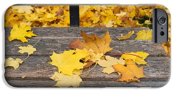 Fallen Leaves iPhone Cases - Fallen Leaves On A Wooden Bench iPhone Case by Panoramic Images