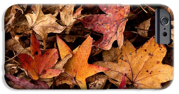 Business iPhone Cases - Fallen Leaves iPhone Case by Rebecca Davis