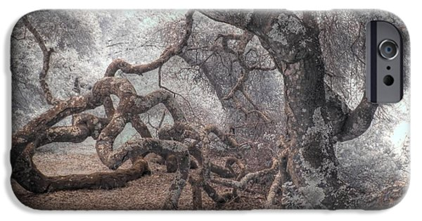 Gnarly iPhone Cases - Fallen Oak iPhone Case by Jane Linders