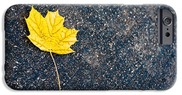 Fallen Leaf iPhone Cases - Fallen iPhone Case by Sebastian Musial
