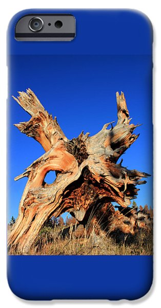 Tree Roots Photographs iPhone Cases - Fallen iPhone Case by Shane Bechler