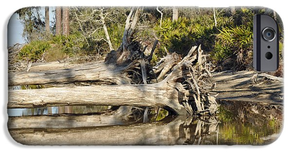 Tidal Photographs iPhone Cases - Fallen Trees Reflected in a Beach Tidal Pool iPhone Case by Bruce Gourley