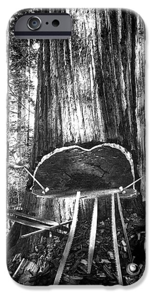 Axes iPhone Cases - FALLING a GIANT SEQUOIA c. 1890 iPhone Case by Daniel Hagerman