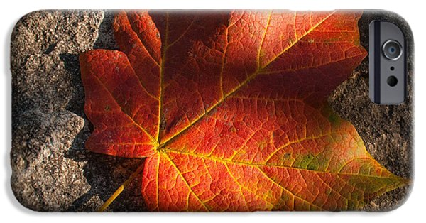 Autumn iPhone Cases - Falling for You iPhone Case by Don Spenner