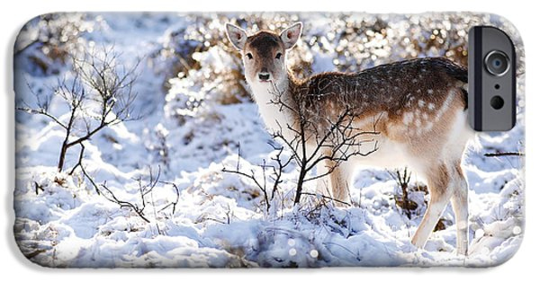 Snow Scene iPhone Cases - Fallow Deer in Winter Wonderland iPhone Case by Roeselien Raimond