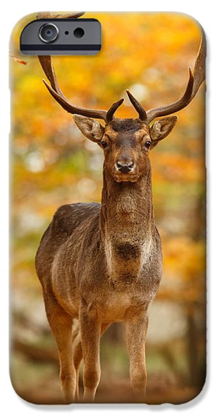 Fall Season iPhone Cases - Fallow Deer in Autumn Forest iPhone Case by Roeselien Raimond