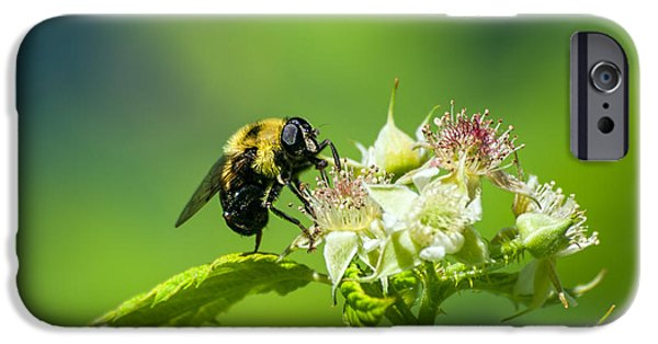 Nectar iPhone Cases - Fame is a bee iPhone Case by Bob Orsillo